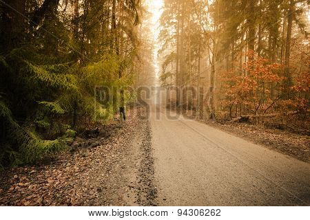 Pathway Through The Misty Autumn Forest