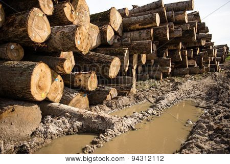 Chopped Tree Logs