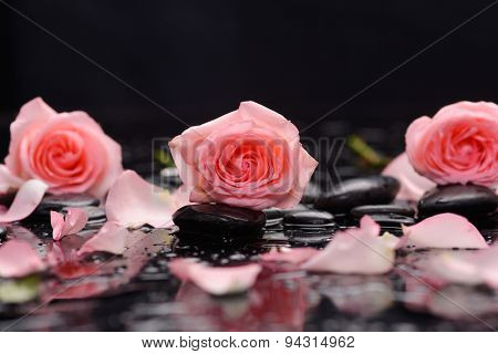Still life with three rose ,petals and wet stones