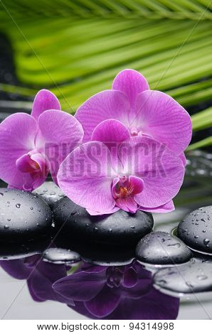 pink orchid with palm and therapy stones