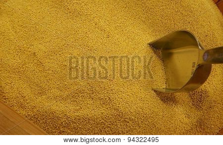 Wheat groats in wooden barrel