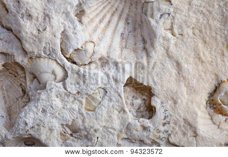 Coquina Background Old Fossil