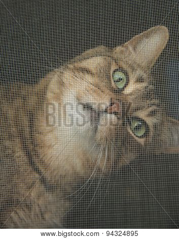 Cat looking through a window screen