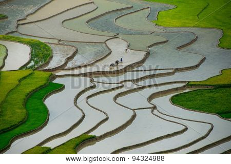 Terraced rice field in water season Mucangchai Vietnam