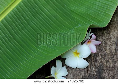 Banana Leaf And Flower On Plank