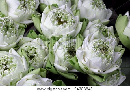 Lotus Fold Group