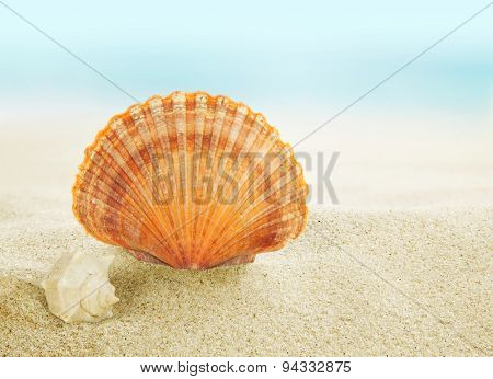 Colorful shell on tropical beach.