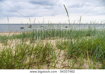 Sedge Grass On Sandy Beach Of Baltic Sea