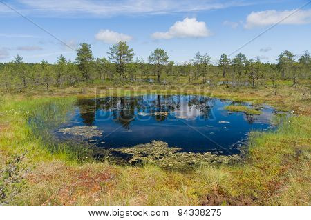 Muskeg Area, Reflection On Water