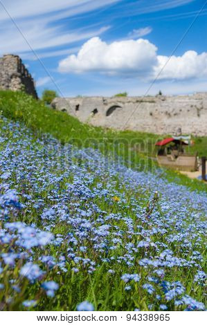Forget-me-not Flowers Field In Park