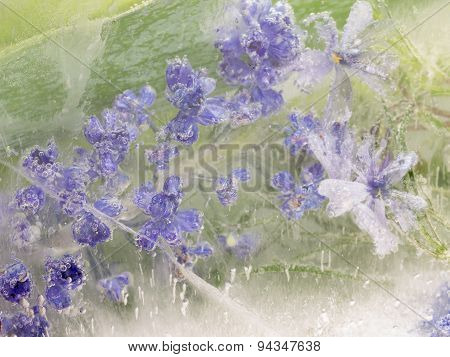 Abstraction From Fragile Lavender Flowers