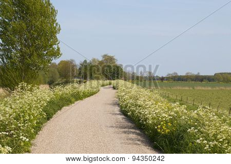 Landscape With Bicycle Path And Grassland