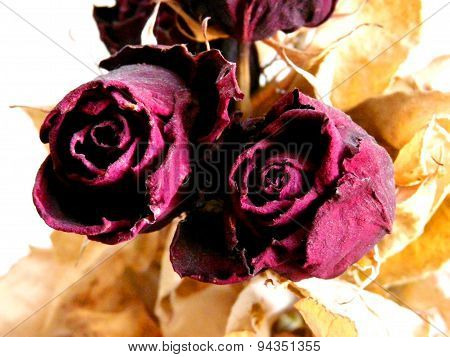 The red roses velvet