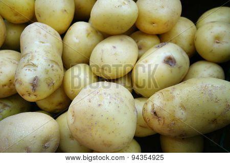 Fresh Organic Young Potatoes