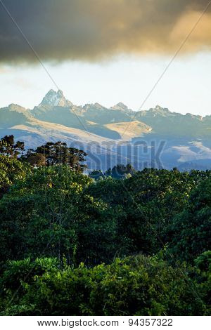 rain forest with mount kenya in background
