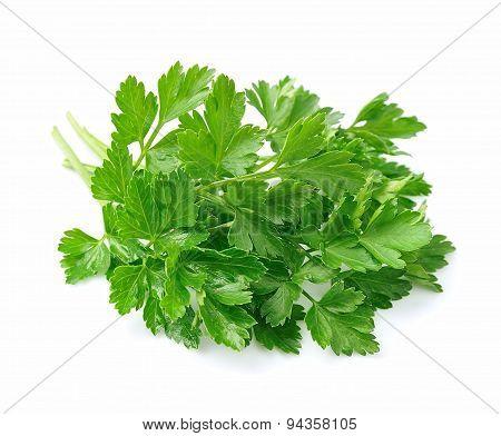 Parsley Herbs Close Up