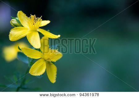 Dainty Golden Flowers