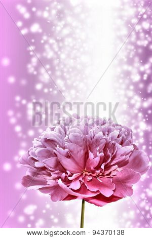 Vertical Background With Peony