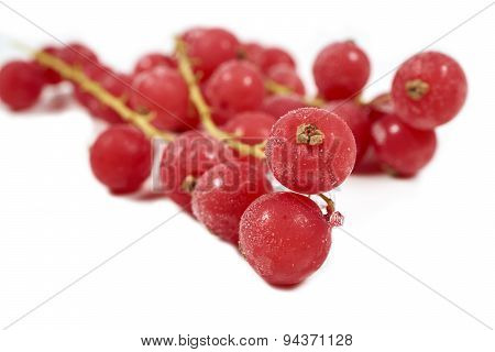 Frozen Currants With Stems On A White