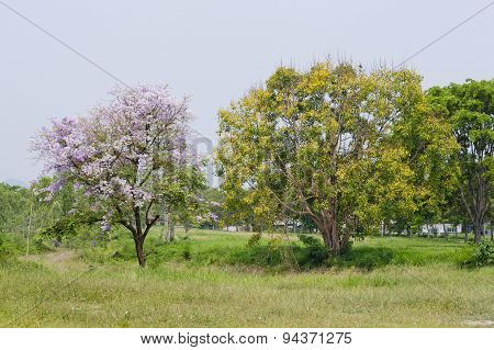 Two Pink And Yellow Trees On A Green Grasses