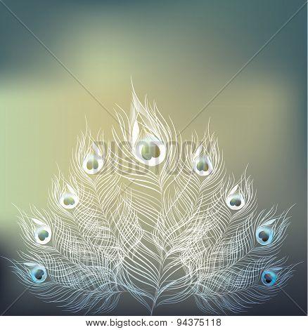 Vector Peacock On Blur Background.vector Illustration