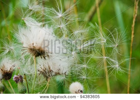 Fluffy Flower On A Green Background.