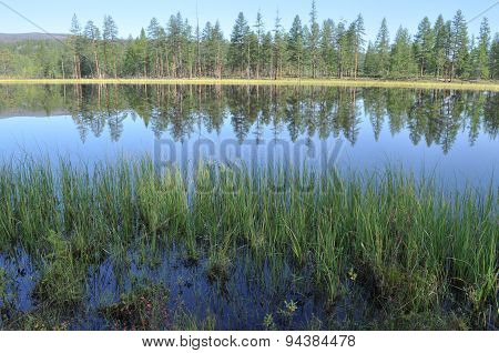 Blue Water Of The Lake Under The Blue Sky Framed Stems Sedges.