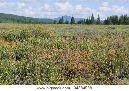 Landscape Yakutian Tundra