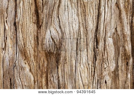 Weathered tree trunk textured background