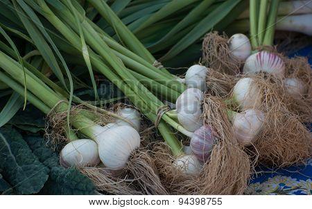 Garlic Bundles