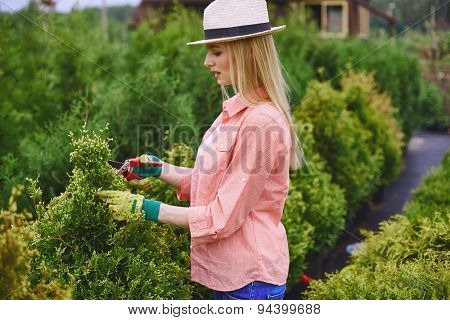 Pretty young woman cutting thuja branches with shears