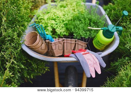 All necessary gardening equipment in wheelbarrow