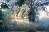 foto of early morning  - Early winter morning in Uruguay. Butia palm native to South America ** Note: Visible grain at 100%, best at smaller sizes - JPG