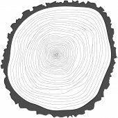 stock photo of cutting trees  - Tree rings - JPG