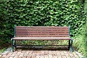picture of ivy  - A bench against an ivy background on a partly sunny day - JPG