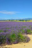 pic of plateau  - Provence France - JPG