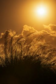 image of pampa  - Tall pampas against bright summer - JPG