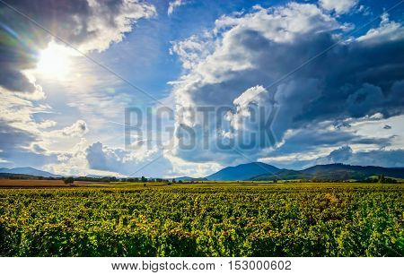 Beautiful Sunlight Over Vineyards With Blue Sky And Mountains On Horizon
