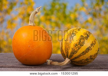 Orange and striped decorative pumpkins on a wooden table with blurred garden background.