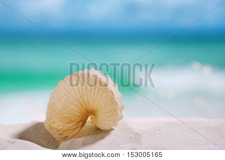 nautilus paper shell on white sandy beach under the sun light, shallow dof
