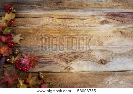 Thanksgiving greeting background with red berries acorn and fall maple leaves . Thanksgiving background with seasonal symbols. Copy space.