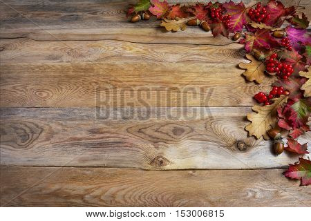 Thanksgiving greeting with red berries acorn fall leaves on wooden background. Thanksgiving background with seasonal symbols. Copy space.