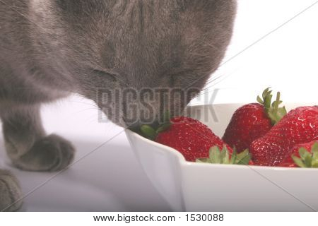 Gray Cat & Strawberries 2
