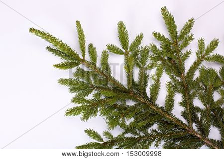 Fresh green branch of fir on a white background. Fir-tree. Spruce.