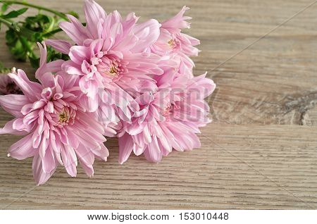 Bouquet of pink asters on a wooden background