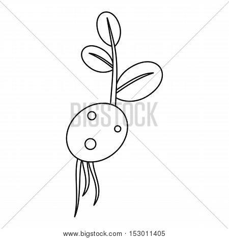 Potato seedicon. Outline illustration of potato seed vector icon for web