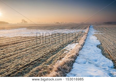 Beautiful Winter Field Landscape