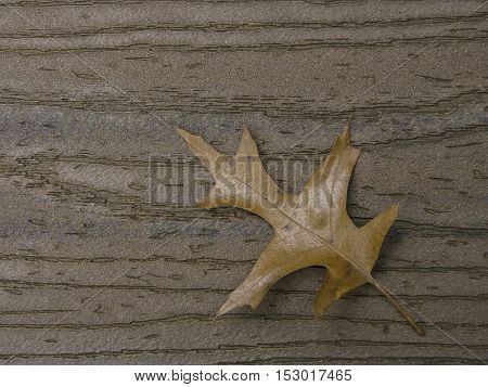 Brown oak leaf on brown boards with stem coming from lower right corner