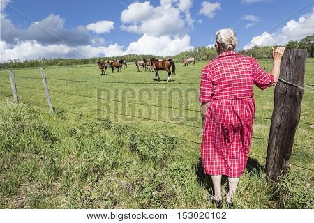 Horizontal image of an elderly old woman wearing a pink dress is standing by the fence and watching a group of horses in the pasture on a warm summer afternoon.