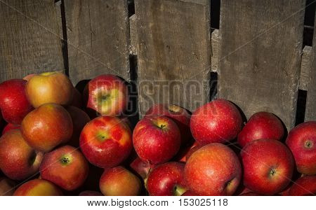 Apples in a pile in a rough wooden crate